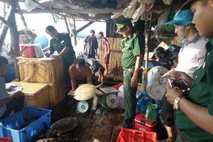 Giải cứu 16 con rùa biển quý hiếm nuôi nhốt trái phép ở Phú Quốc
