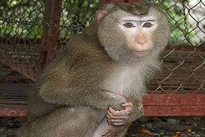 Người phụ nữ bị khỉ nuôi của nhà hàng xóm cắn nát tay