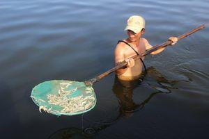 Hộ dân mất trắng 900.000 con tôm, nghi vấn ao nuôi bị đầu độc