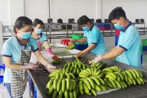 Khảo sát đánh giá chất lượng doanh nghiệp Việt Nam hội nhập CPTPP: Công ty TNHH MTV lương thực Vĩnh Lộc