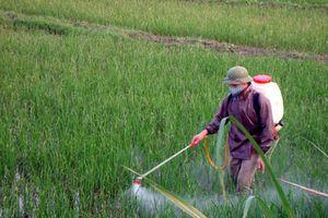 Nguy cơ ngộ độc, ung thư do dư lượng thuốc bảo vệ thực vật