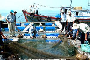 Nghiên cứu khoa học công nghệ ứng phó BĐKH vùng ven biển