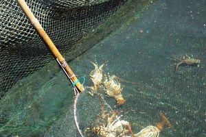 Vạn Ninh (Khánh Hòa): Xuất hiện tảo độc dày đặc trên vịnh Vân Phong