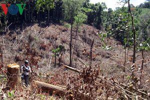 Khó giám định thiệt hại, xử lý trách nhiệm sai phạm ở Ban quản lý rừng