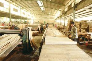 Doanh nghiệp chế biến gỗ, thủy sản sẽ có định mức tiêu thụ năng lượng