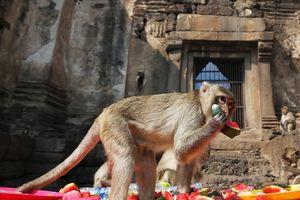 Lễ hội khinh khí cầu, bữa tiệc cho khỉ hấp dẫn du khách tháng 11