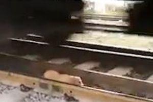 Con chó biết tự thoát thân khi lọt vào đường ray tàu hỏa