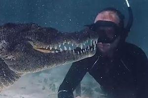 Thợ lặn quay lại cảnh phim bơi cùng cá sấu ở Mexico