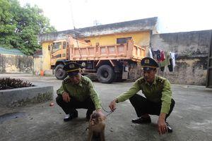 Bắt vụ vận chuyển động vật rừng quý, hiếm