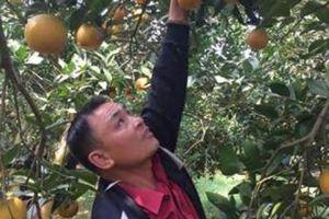 Vốn Agribank góp phần xây dựng thương hiệu nông sản Việt
