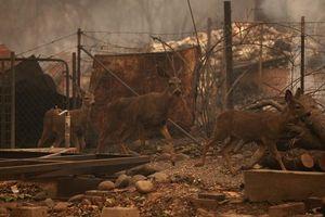 Thảm họa cháy rừng ở California: Khi thiên nhiên bị nhấn chìm trong biển khói lửa