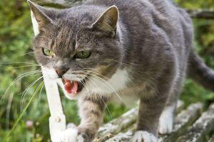 Một du khách Anh chết do bị mèo cắn