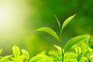 8 bí quyết chống lão hóa từ thiên nhiên của phụ nữ phương Đông