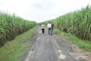 5 dự án cánh đồng lớn ở Nghệ An được hỗ trợ 1,5 tỷ đồng