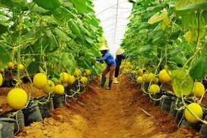 Quảng Nam: Giá trị sản xuất nông, lâm nghiệp và thủy sản đạt gần 14 ngàn tỷ đồng