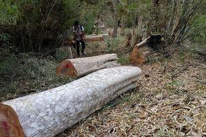 Rừng vẫn mất, tiền bảo vệ rừng bị chính Ban quản lý trục lợi