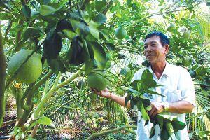 Nông sản: Xuất khẩu tăng, giải cứu nhiều?