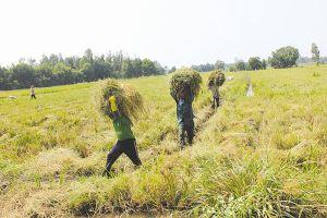 Thị trường 'ngầm' quyền sử dụng đất nông nghiệp đang 'nổi'