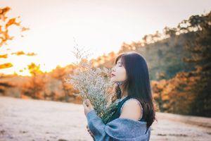Vì sao cỏ hồng ở Đà Lạt còn được gọi là cỏ tuyết?