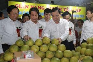 Lần đầu tiên tỉnh Phú Thọ tổ chức lễ hội bưởi