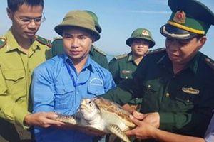 Thả đồi mồi quý hiếm về biển ở Hà Tĩnh