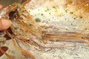 Không nên ăn các thực phẩm khô bị nấm mốc