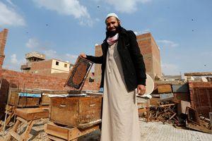 Kỳ lạ người đàn ông Ai Cập dùng nọc độc ong trị bệnh