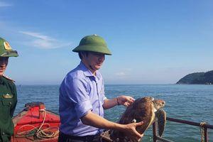 Hà Tĩnh: Thả một con rùa quý hiếm về biển