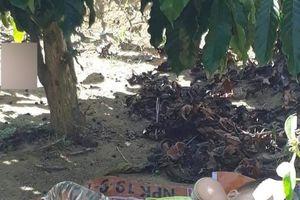 Bé trai ngủ ngon lành trên tấm bạt dưới gốc cây cà phê khi theo bố mẹ lên rẫy