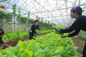 Hỗ trợ lồng ghép giới trong nghiên cứu chuỗi giá trị nông nghiệp