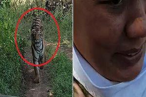 Bị hổ rượt đuổi trong công viên, nhóm du khách hoảng sợ tháo chạy