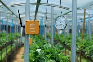 Nông nghiệp 4.0: Phải làm công nghệ trước