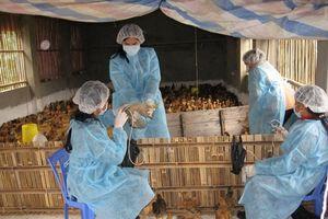 Phòng chống dịch bệnh cho vật nuôi: Nhiều thách thức