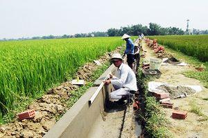 Quảng Nam: Nhất trí cho DN đầu tư gần 75 tỷ đồng phát phát triển nông nghiệp