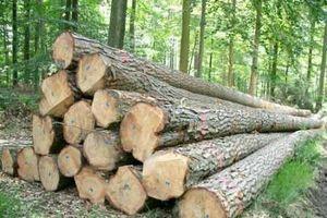 Ngừng tạm nhập, tái xuất gỗ rừng tự nhiên từ Lào và Campuchia