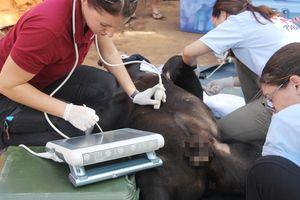 Giải cứu gấu chó bị 'giam cầm' 16 năm tại thác Prenn Đà Lạt