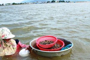 Nhọc nhằn nghề cào hến, cào ốc mưu sinh dưới lòng sông Dinh