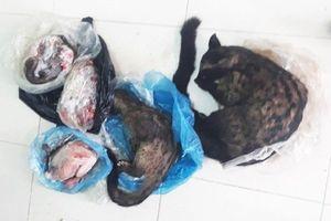 Chủ tịch hội Chữ thập đỏ bán động vật hoang dã, bị phạt 6 triệu đồng