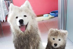 15 bức ảnh chứng minh thế giới động vật đáng yêu nhưng cũng rất kỳ quặc