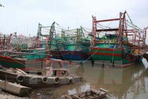 Đường điện cao thế 'bịt' cảng cá lớn nhất Hải Phòng