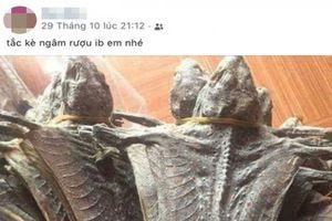 Phạt nữ cán bộ rao bán động vật hoang dã trên mạng xã hội