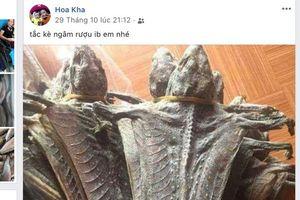 Lên mạng xã hội công khai rao bán động vật hoang dã