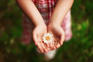 Muốn giúp đỡ ai đó hãy giúp một cách khôn ngoan đừng dốc hết lòng hết dạ