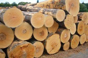 Tạm ngừng kinh doanh tạm nhập, tái xuất gỗ tròn, gỗ xẻ rừng tự nhiên từ Lào, Campuchia