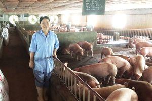 TP Hà Nội đẩy mạnh các giải pháp phát triển chăn nuôi hữu cơ