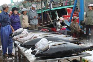 Doanh nghiệp kêu cứu vì container hải sản bị tắc ở cảng suốt nửa tháng