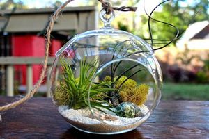 Lạ mắt những khu vườn tý hon trong bình thủy tinh