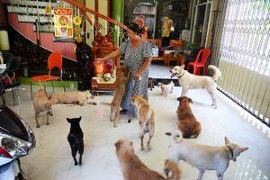 Người phụ nữ U.70 đối mặt 'cẩu tặc' cứu chó, nhà hàng chục chó hoang