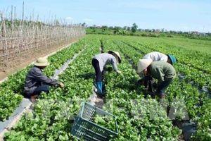 FLC sẽ bắt tay với các doanh nghiệp nông nghiệp hàng đầu Israel