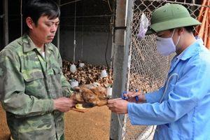 Chủ động phòng chống dịch bệnh cho đàn vật nuôi